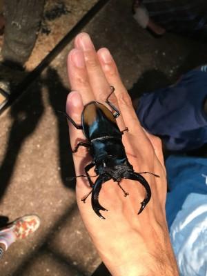 オービィ横浜は「2大昆虫展」開催中!虫好きは要チェック。触れ合える!