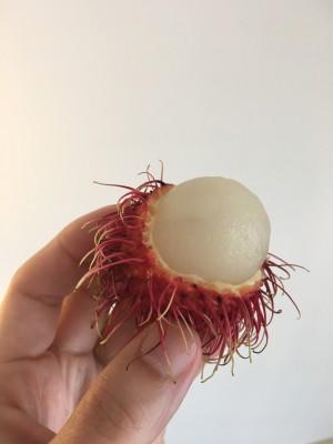 常夏の国タイは果物も美味しい!スネークフルーツ(蛇の果物)は〇〇の味!