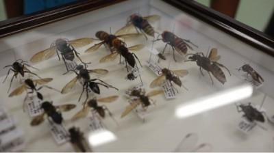 【自由研究】初めての昆虫の標本づくり!