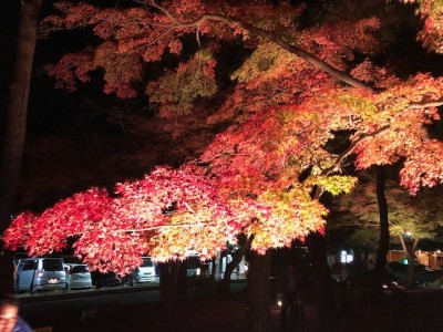 紅葉の秋!長瀞で紅葉のライトアップに行ってきました。
