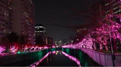 【冬の桜】目黒川沿道は満開!都会のど真ん中でグランピング気分を味わう♪