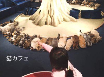 【猫カフェ】2月22日は猫の日☆子供も一緒に猫カフェに行こう!!