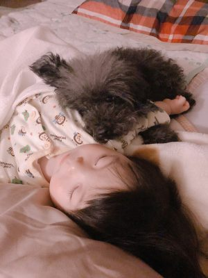 愛犬の旅立ちから1週間…4歳の娘への『死』の伝え方