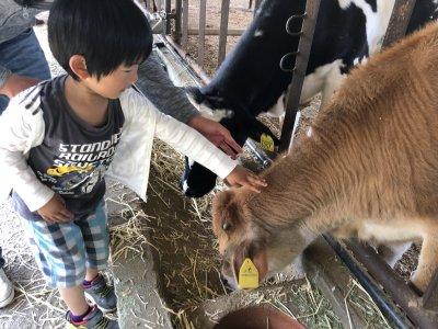 【おでかけ】牛が触れる、自然いっぱい!バーベキューOK!!