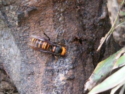 家の中にハチが侵入して2日間格闘!対処はどうしたらいいの?