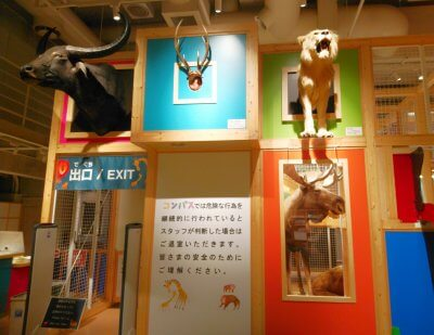 【おでかけ】幼児向け施設【国立科学博物館・コンパス】に行ってみた!