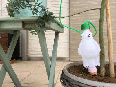 【ダイソー】お泊りの時は自動給水器におまかせ!!