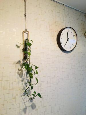 ~小さな子供がいても楽しめる~観葉植物は「吊るす」が一番!